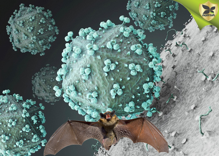 All You Need To Know About Nipah Virus